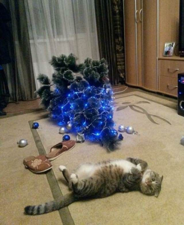 10+ Cats Proud of their Work with the Christmas Tree