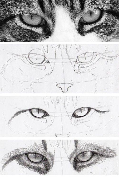como-dibujar-ojos-de-gato