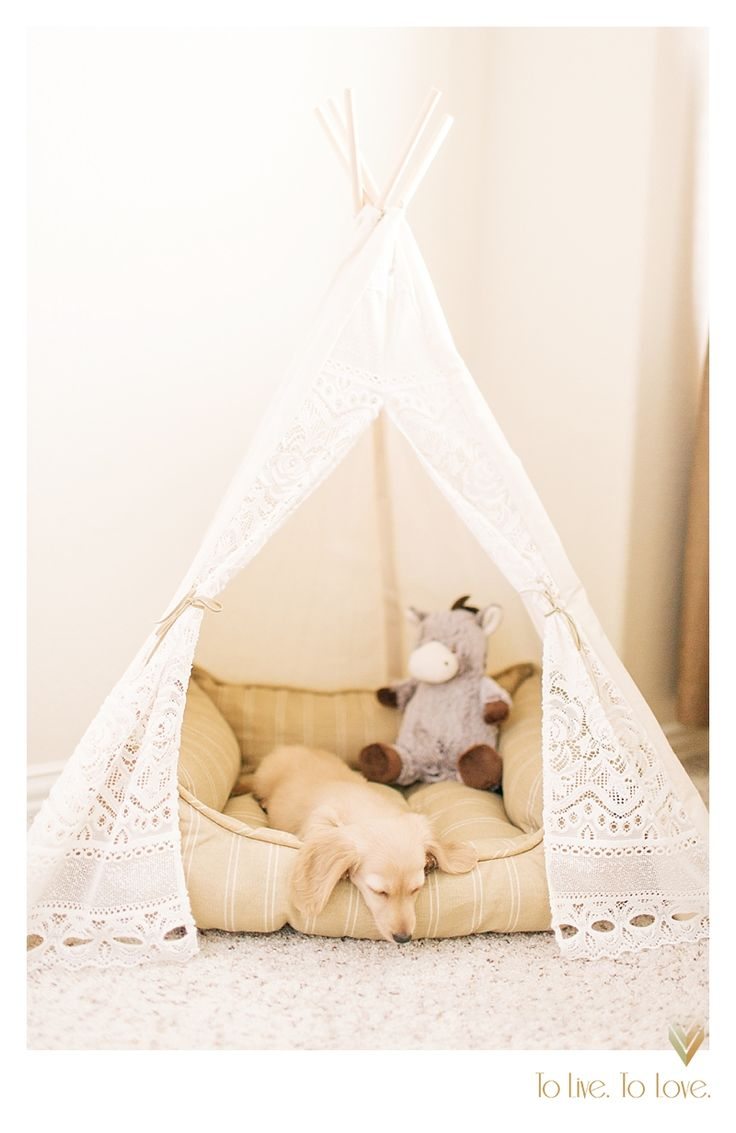 Miniature longhaired dashchund cream in teepee sweet female puppy  Photography by To Live. To Love. Photography
