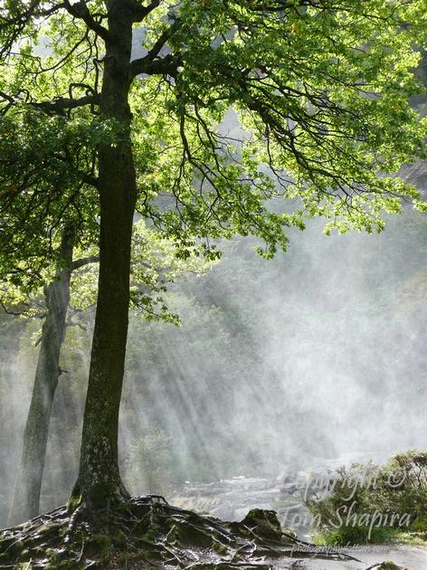 Tree of Light (Powerscourt, Ireland) /  Photographer: Tom Shapira