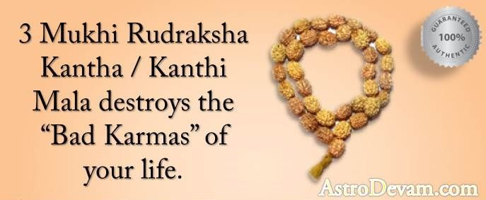 Three Mukhi Rudraksha helps in improving knowledge and memory power. Those who seek better health, wealth and spirituality should wear this powerful Rudraksha Mala. AstroDevam.com' is providing 100%  authentic, Genuine and Original 3 Mukhi Rudraksha Mala to its clients.  Call:- +91-9650511113