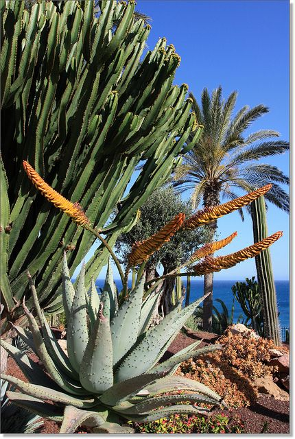 Tropical Canary Islands