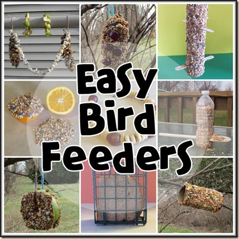 Easy Bird Feeders - This will go great with our current bird-watching craze!
