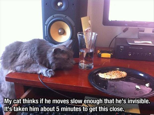 Funny Cats - Cat Wants Your Food (225 Pics)