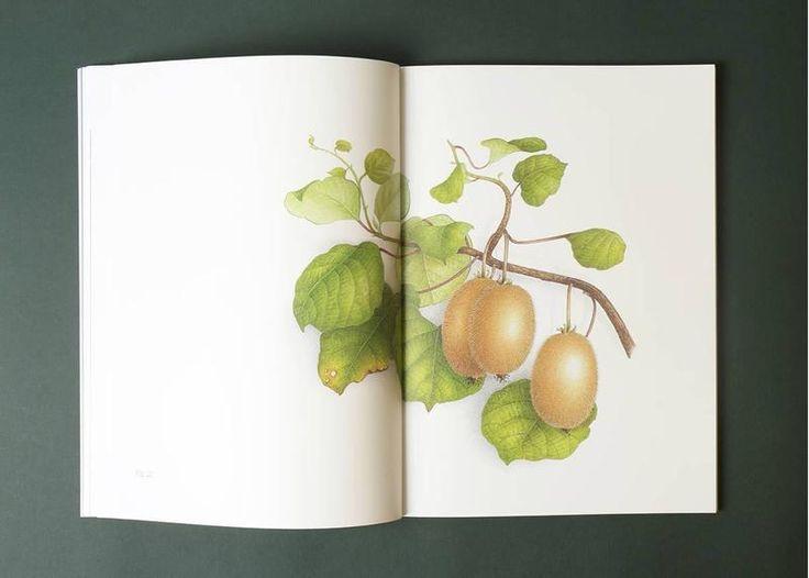 Le Livre D Art Vincent Jeannerot Aquarelles Botaniques Livre