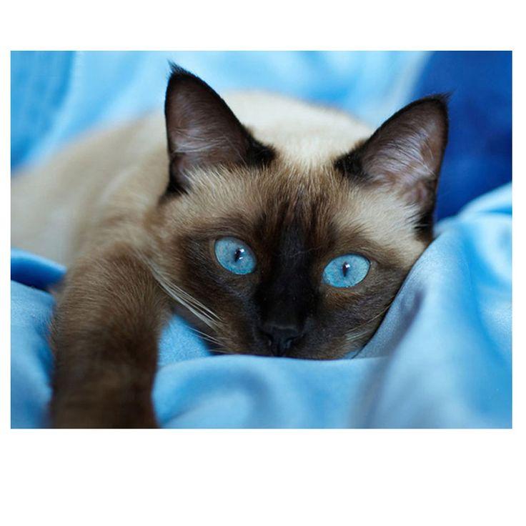 Aliexpress.com: Kup Diy diament malowanie niebieskie oczy kota i kwiat okrągły diament mozaika haft krzyżykowy haft zwierząt wystrój domu od zaufanego diamond painting blue dostawcy na Megayouput