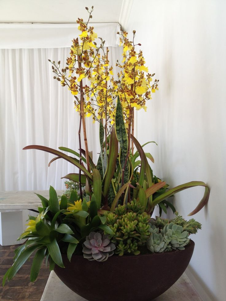 38 best images about orchid arrangements on pinterest for Garden arrangement of plants