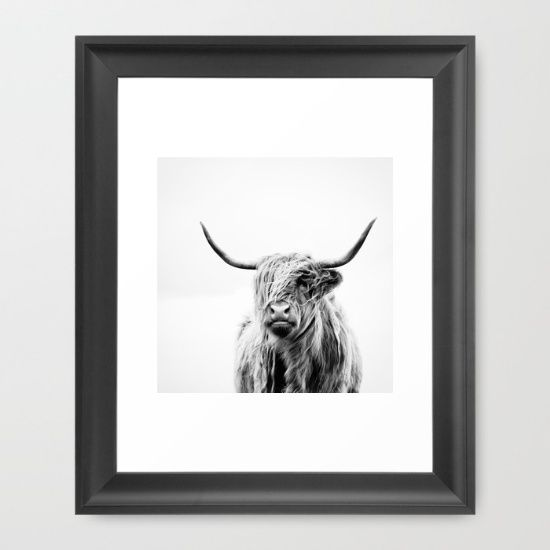 LOUNGE cow, cattle, Scottish, typical...