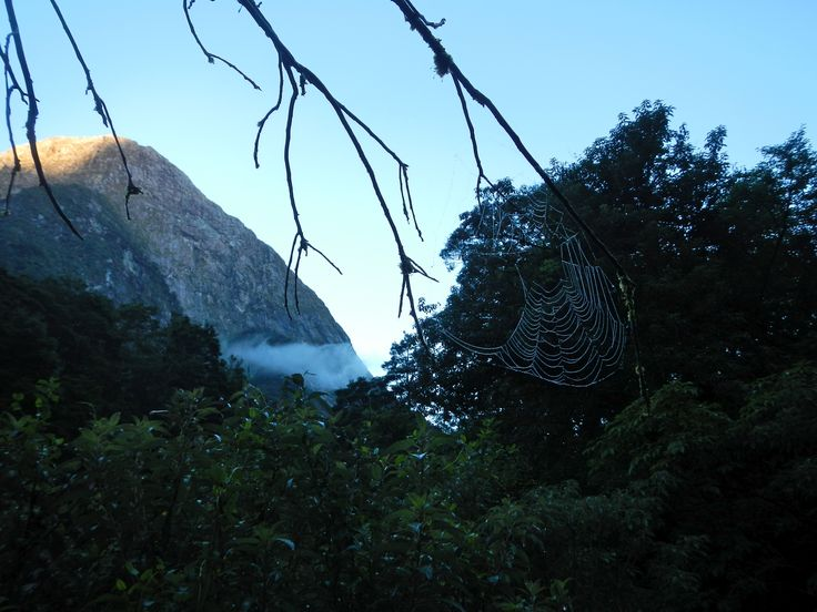 From little things big things grow...Milford Track Feb 2012