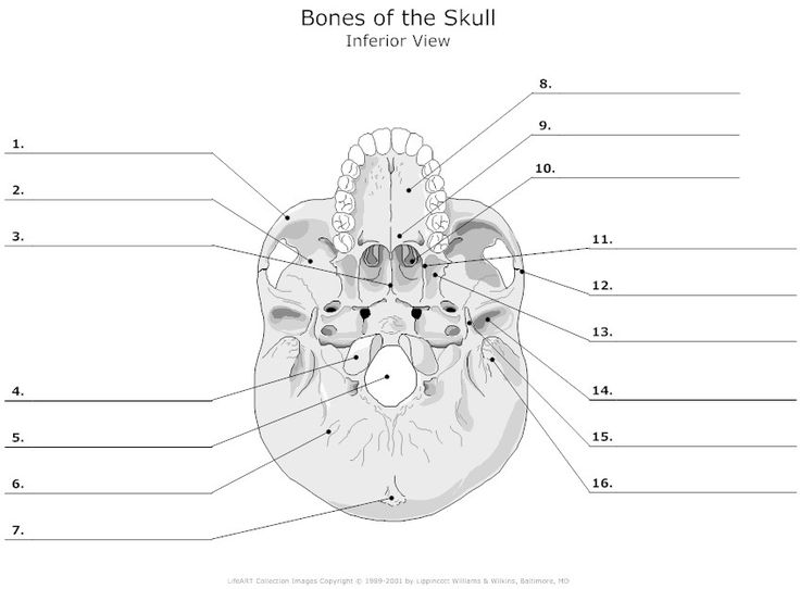 28 best applied anatomy quez images on pinterest | nursing schools, Skeleton