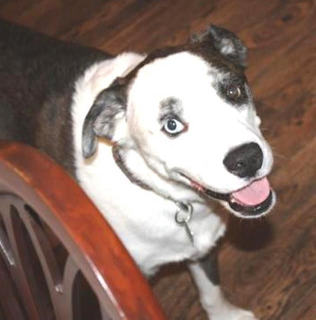 Adopt Gracie On Dog Search Adoption Dogs