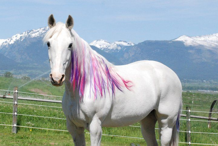 Very Pretty Horse Dye Creative Or Crazy Pet Grooming