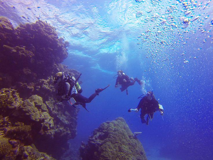 Marine Conservation program on the Great Barrier Reef http://www.nolimitadventures.com.au/marine-conservation-program/