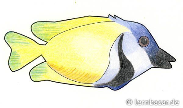 Exotische Fische mit Buntstiften malen und das Klassenzimmer verschönern - Startpunkt DE