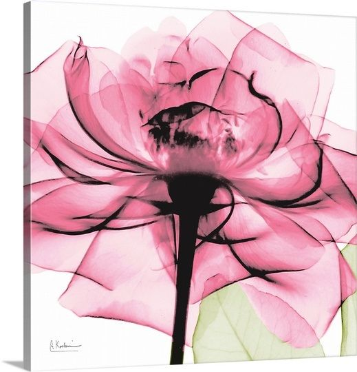 X Ray Of Rose Watercolor Amazing Tattoo For Me Yeti: Pink Rose X-ray Photography