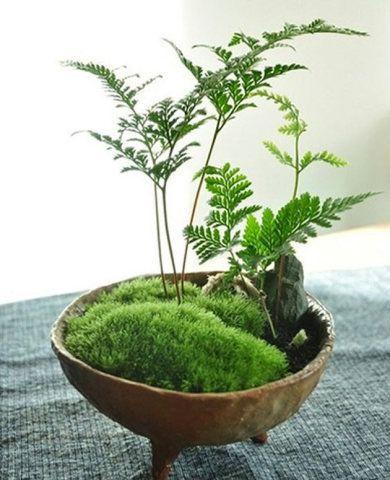 425 O canto de meditação fica completo com este mini jardim.       1025 A combinação de pedra e plantas provê passividade ao ambiente.
