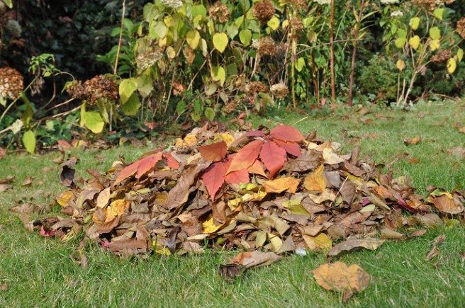 Kompostowanie liści czyli jak zrobić bogatą w składniki mineralne ziemię lisciowa.