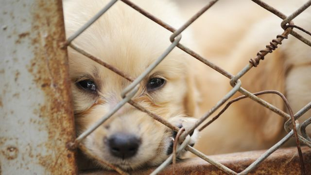 Petition · The Australian Government: BAN PUPPY FARMS IN AUSTRALIA · Change.org