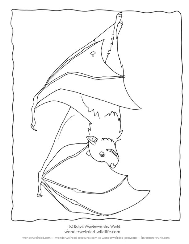 fruit bat coloring pages - photo#15