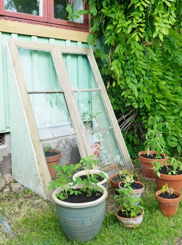 (Pretty, sort of antique looking--and with all our old windows could build alng the baack south crawl space wall--its about 4-5 feet tall!) Green Greenhouse-A smart little greenhouse made from old windows are easily set up to house wall. Here seedlings grow large before they are planted out. Old windows and doors are found at flea markets and recycling stations