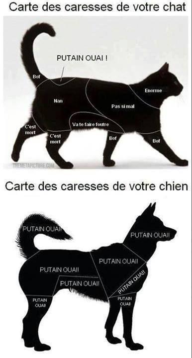 HUMOUR - Carte des caresses chez le chat et le chien.
