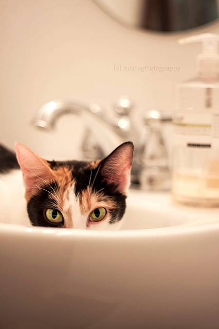 """Who are you? Who do you work for? Why are you near my sink?"""