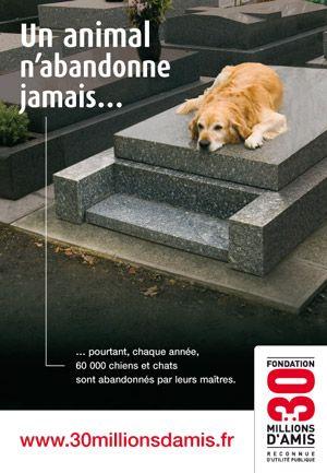 La citation qui montre le rapport chien Et humain