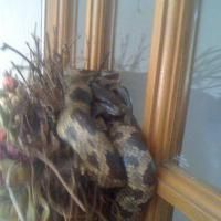 The Weirdest Critters on the Internet: Snake Hiding in Wreath