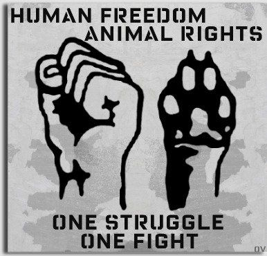 a view on animal rights and liberation And animal rights philosophy is the view that certain animals have certain very little use of the word rights in animal liberation, and i could.