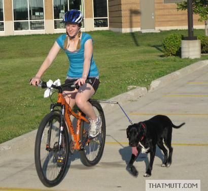 64 Best Bicycle Dog Leash Images On Pinterest Bicycle Bill O