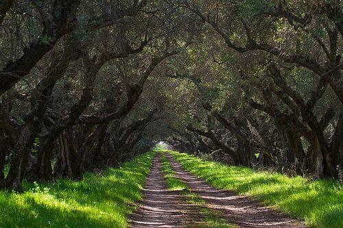 Temecula, California