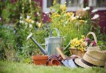 Уход за красивоцветущими многолетниками в разгар лета - Сад и огород