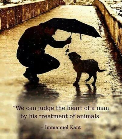 We can judge the Heart of a man by his treatrment of animals. Close your eyes, clear your heart, let it go...
