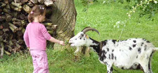 Découvrez nos belles adresses spéciales familles ! Pour un séjour cocooning en familles. faites le bonheur de vos enfants... à l'Ecomusée d'Alsace.