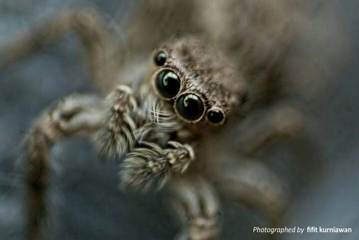 Spider top :P