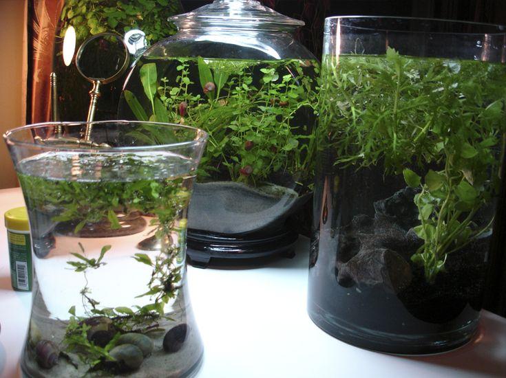 94 best water gardens images on pinterest indoor plants for Indoor gardening glasses