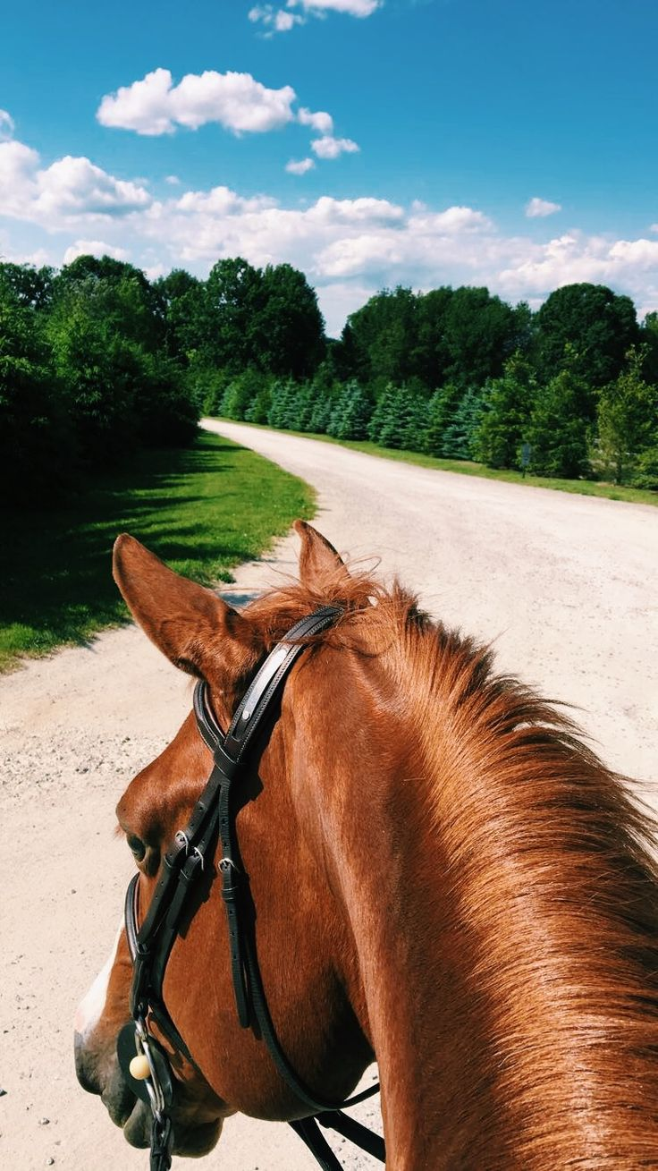 The best view, from the back of a horse!