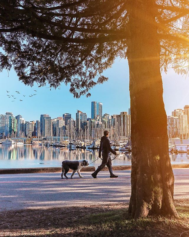 Welcoming spring  #stanleypark #seawall #spring #outdoor #jogging #cityview #oceanview #explorebc #veryvancouver #dailyhivevan