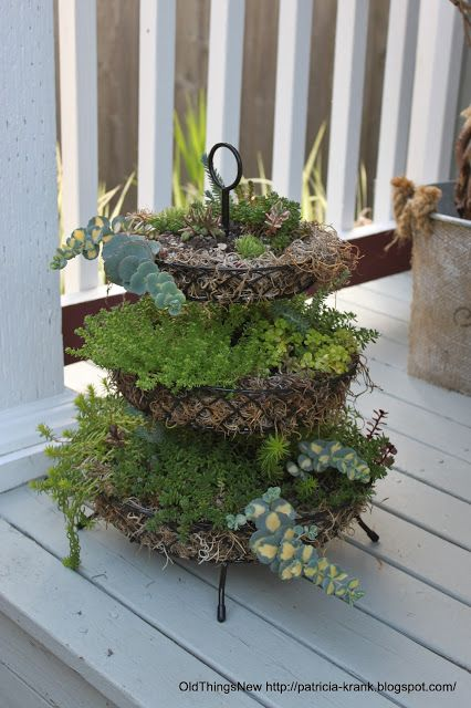 Three-tier succulent planter -   ined with a little Spanish moss (also found at the thrift store) and some potting soil he was all ready for some succulents poked in at random. Planting succulents really is that easy. They don't have a large root system, can be poked in just about anywhere and survive with very little water.