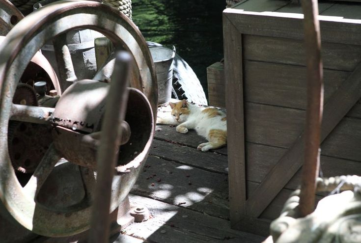 """Wicklund, a writer and lawyer from New York, told us, """"Any multi-acre park in an urban area will probably have some number of feral cats, so I wasn't surprised when we saw a cat hanging out in the vegetation of the 'woodland' area. I was, however, surprised that the cat looked healthy, well-fed, and reasonably acclimated to people. When we informed a Disney maintenance worker about the cat, she told us that, unlike so many other parks, Disney addresses the issue by allowing the cats to…"""