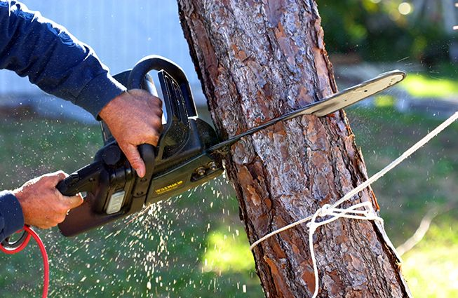 There are a number of ways to know if a tree is dying. Deadwood, decay, crown loss, and trunk damage. All this makes it very essential to remove a tree through professional services.