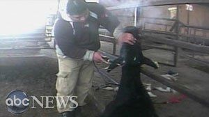 Got Milk? Animal Rights v #blotter, #anna #schecter, #dairy, #dairy #farms, #farm, #cows, #milk, #detailing, #dehorning, #animal #cruelty, #investigative #news, #investigative #reporting, #blotter http://earnings.nef2.com/got-milk-animal-rights-v-blotter-anna-schecter-dairy-dairy-farms-farm-cows-milk-detailing-dehorning-animal-cruelty-investigative-news-investigative-reporting-blotter/  # Sections Shows Yahoo!-ABC News Network   2017 ABC News Internet Ventures. All rights reserved. Got…