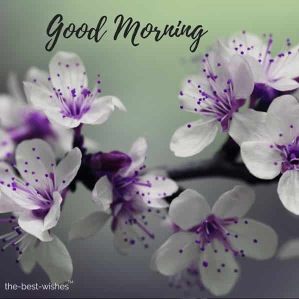 200 Beautiful Good Morning Wishes With Flowers Best Hd Images Good Morning Flowers Beautiful Good Morning Wishes Good Morning Wishes