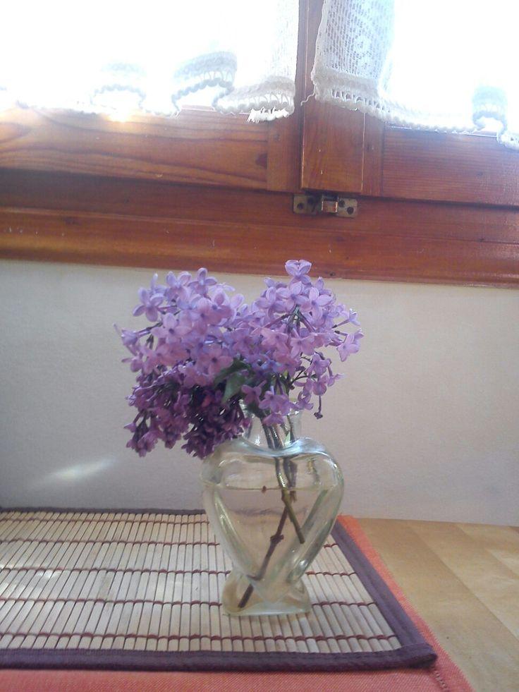 Πασχαλιές ♥ lilac .