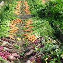 Cómo empezar tu huerta orgánica o ecológica ecoagricultor.com