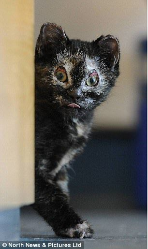 'The luckiest kitten in Britain' finds a loving home...