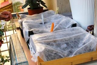 L'orto sul balcone e l'orto nel campo: Coltivare pomodori in vaso