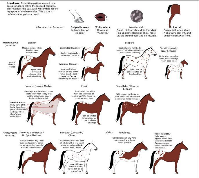 Horse Coloring Types Tips