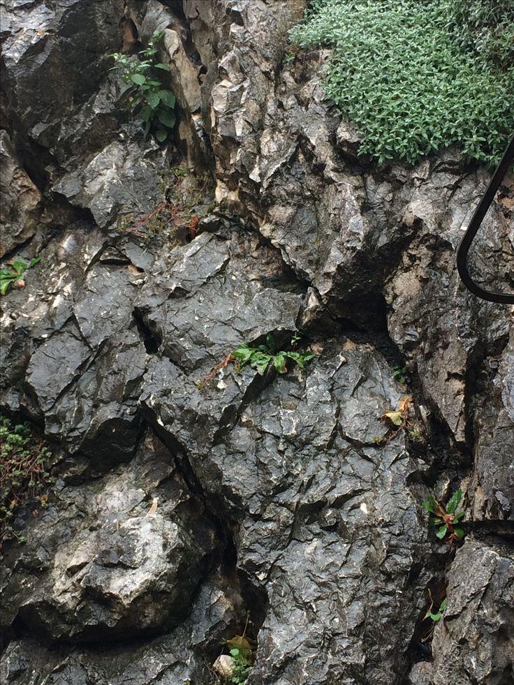 #stone #nature #green