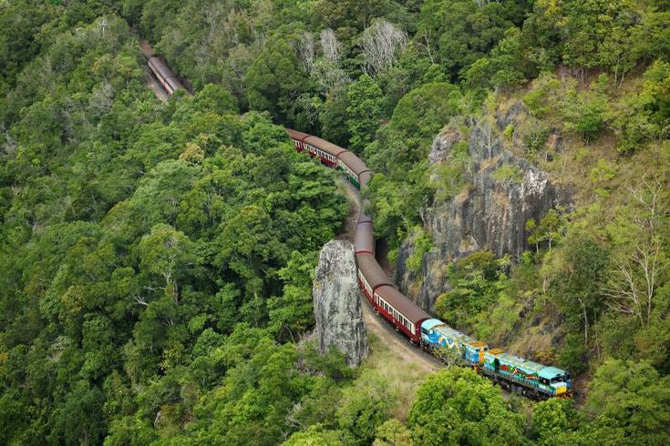 Tropic Wings - Classic Kuranda Experience/ value tour starts from from $235 The best way to maximise your #Kuranda and Australian Experience, where you'll get to explore indigenous culture, native wildlife and World Heritage #Rainforest all in one day full of fun! #CairnsTour